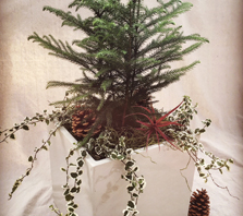 Wholesale Wreaths | Holiday Greens | Wreaths | Garlands | Denver | Colorado