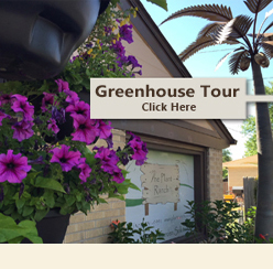 Wholesale Greenhouse | Greenhouse | House Plants | Denver | Colorado