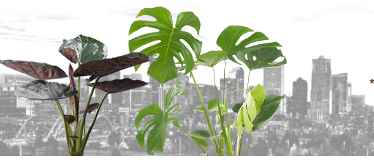 Greenhouse | Wholesale Plants | Foliage | Tropical House Plants | Denver | Colorado